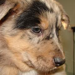 Quattordici nuovi esemplari, pronti per l'adozione, ospitati nel Canile Sanitario
