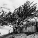 Morro Branco - Tree - Fortaleza/CE - Brazil