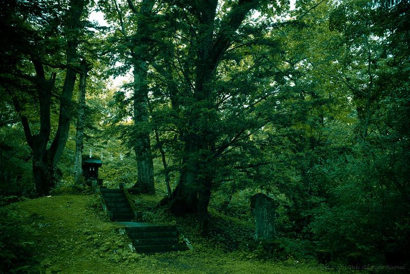 Deep forest1