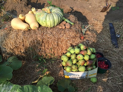 harvest IMG_2882