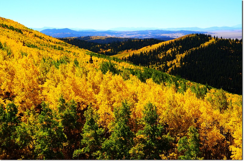Fall colors at Kenosha Pass, Colorado (14)