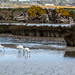 Spoonbills by grantg59@xtra.co.nz