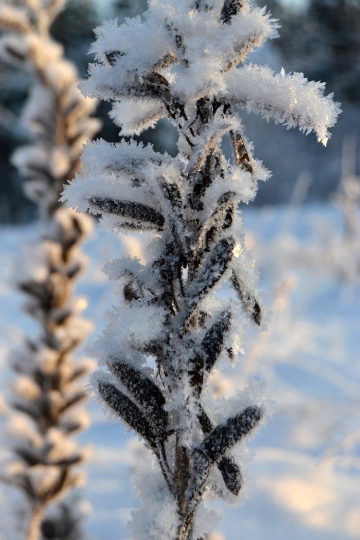 winterw3
