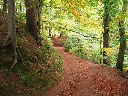 Gelt Woods (3)