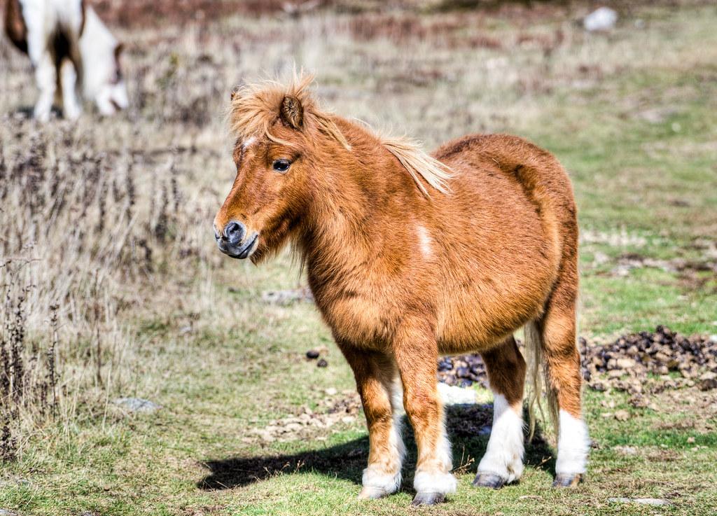 Pony Pal