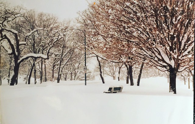 View from Southgate St. across from Beacon Hill Park. Photo Pam Fortune