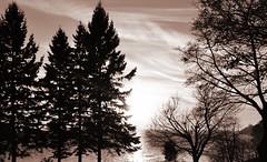 three trees and the lake