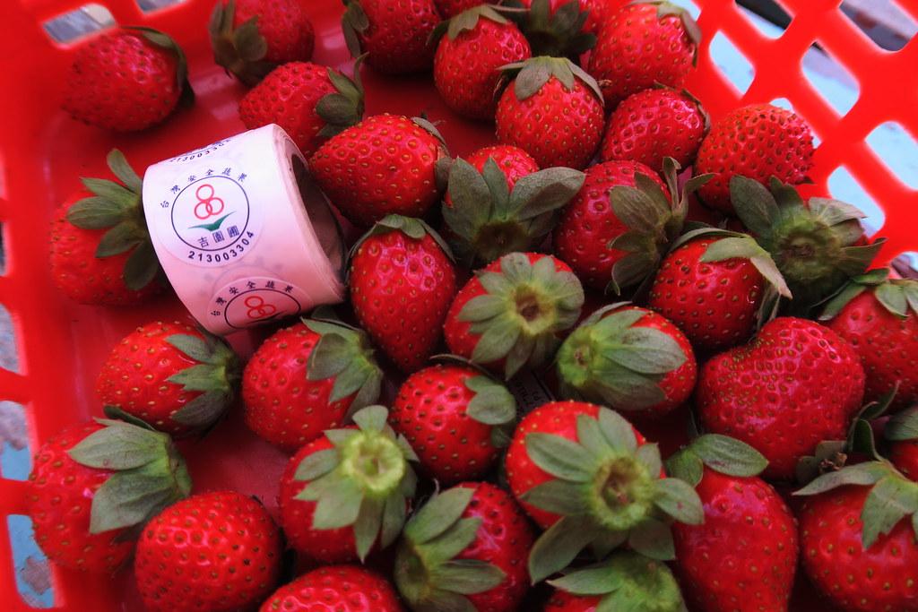 阿蓮三本草莓園 (18)