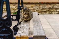 Cat - Photo of Forcalqueiret