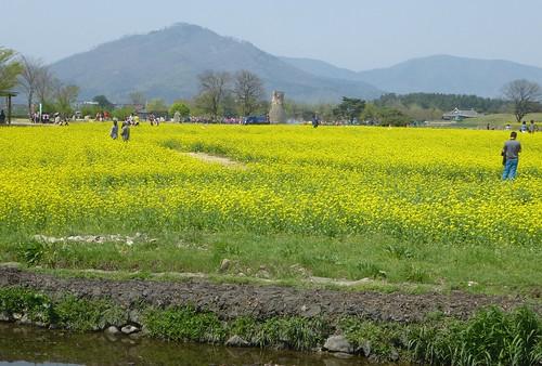 Co-Gyeongju-Parc Wolseong (1)a