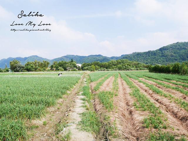 桃園大溪景點中新里韭菜花 (22)