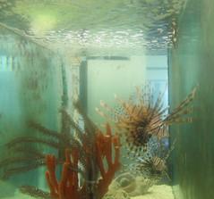GS Marine Lab Lionfish 7