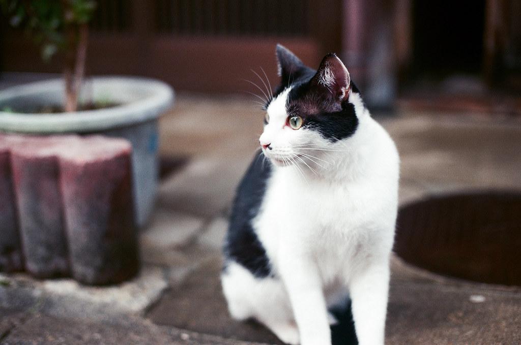 貓 Cat Kyoto 京都 2015/09/23 剛從大阪到京都下榻的地方後,我就帶著相機趁黃昏前來到清水寺。在京都我住在清水寺下面的路口旁,所以很近。但那天我上去清水寺之後一路往北走到花見小路的路上看到這隻很可愛的貓貓!她其實很漂亮,但有點胖胖就是 ...  Nikon FM2 Nikon AI Nikkor 50mm f/1.4S AGFA VISTAPlus ISO400 0948-0032 Photo by Toomore