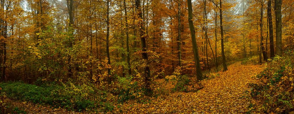 Waldweg / Forrest Path