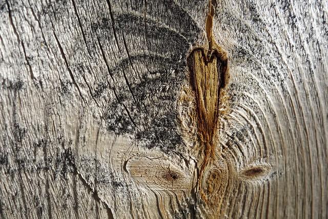 DSC00091 Heart Wood