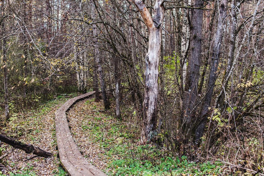 Pääskylän luontopolku (Pääsküla rabarada)