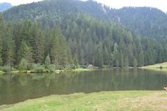 Lago dei Caprioli - Roebucks' Lake
