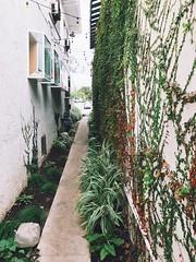 green alley.