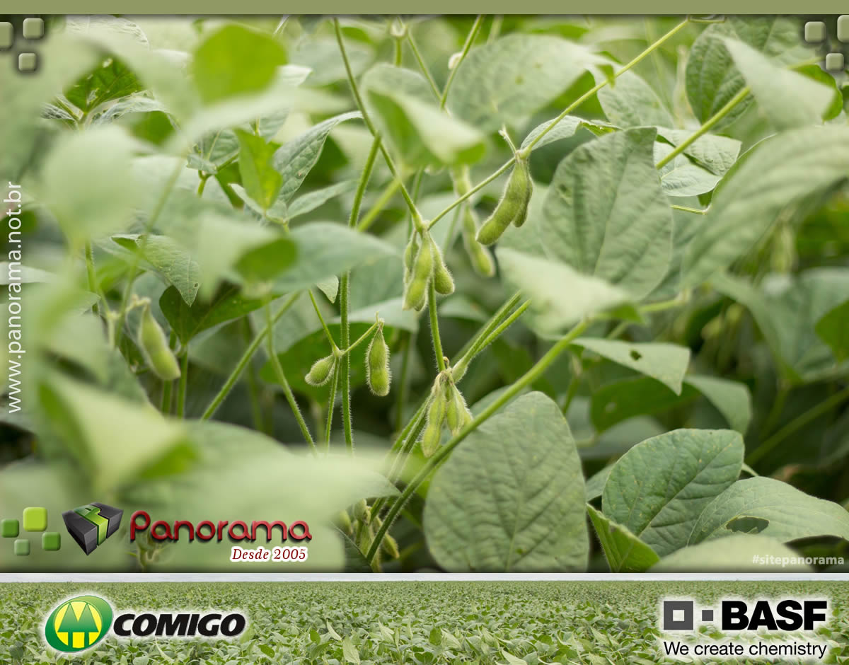 PaNoRaMa COD (100)