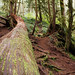 Small photo of Explore Oregon Recreation: Alsea Falls