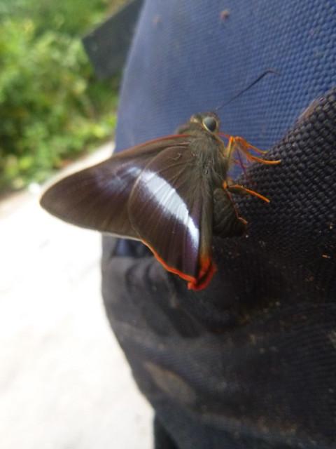 Butterfly (1), Panasonic DMC-FT25