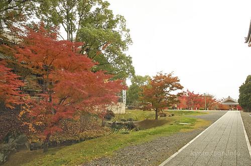 【写真】2014 紅葉 : 智積院/2020-09-07/IMGP7557