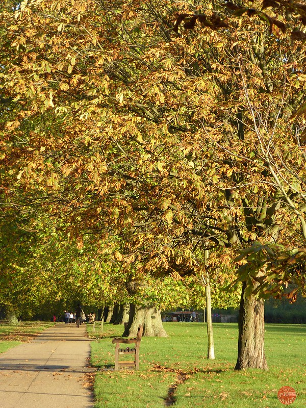 hyde park autumn