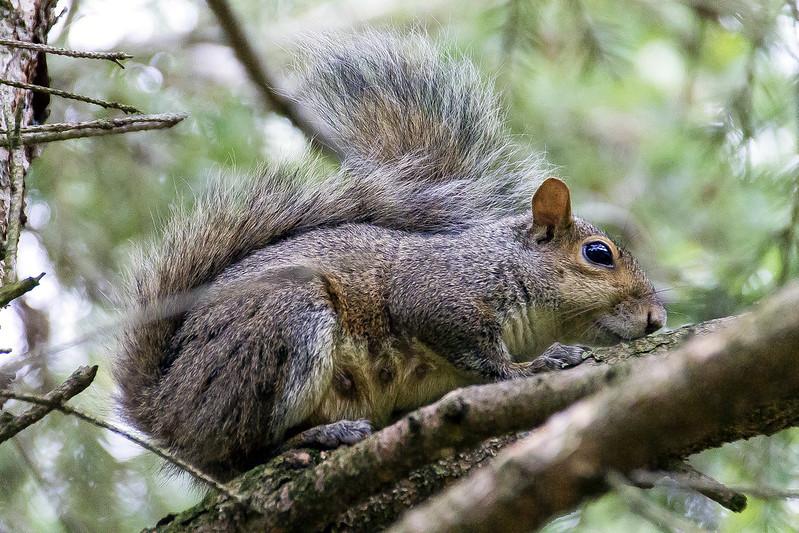 Fotos de animales de todo tipo incluyendo mascotas que más te gustan - Página 3 21489338293_914cbd8944_c