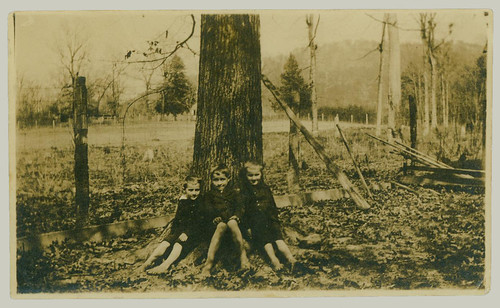 Three boys and tree