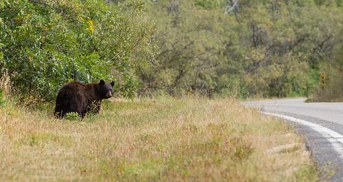 bear usa colo coloradosprings aspens murdock laveta highwayoflegends