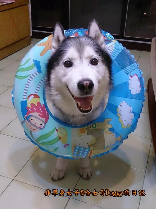 Doggy颱風10