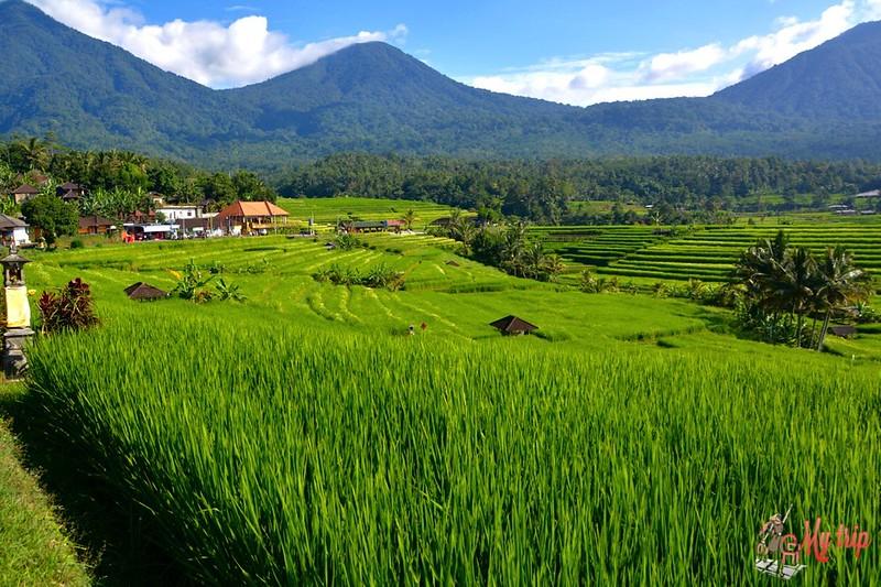 les rizieres de jatiluwih