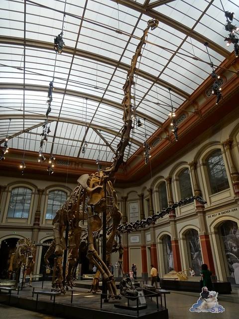 Naturkunde Museum Berlin 17.07.2015  01
