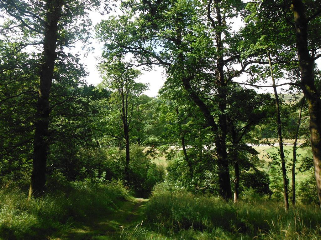 Grass Wood 2