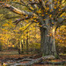 Ashridge, autumn colours by JonoHub