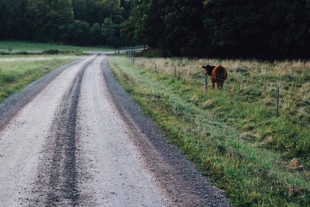 Tjur i Tinnerö Eklandskap | Matildigt