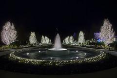 Washington Temple 2015 Christmas Lights  (19)