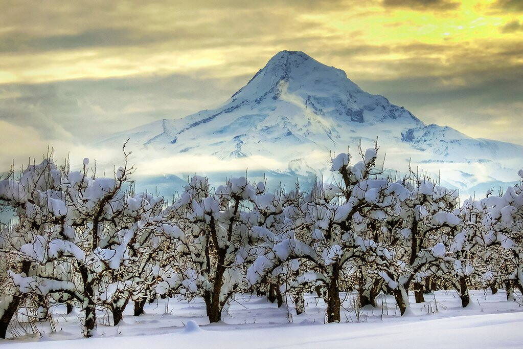 Snowy Mt. Hood