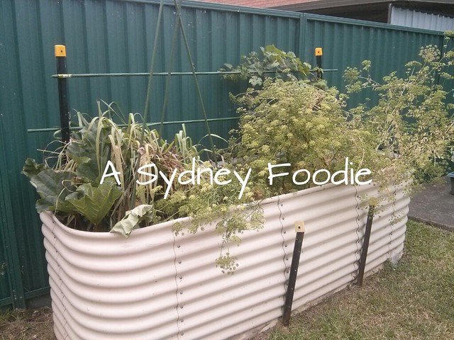 South facing planter box