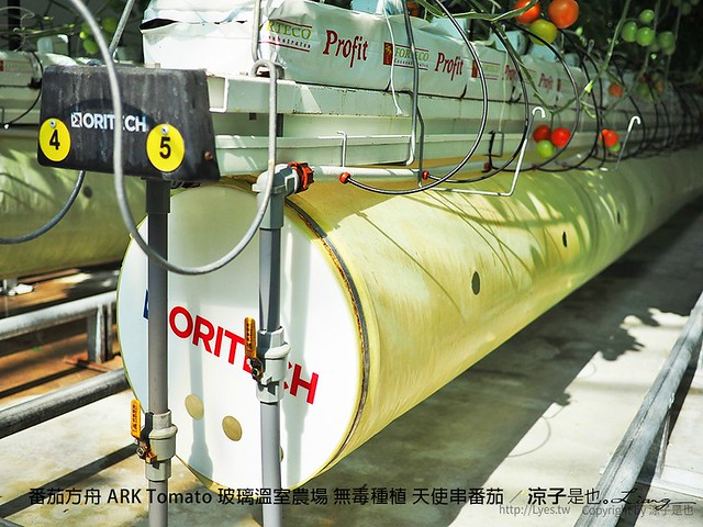 番茄方舟 ARK Tomato 玻璃溫室農場 無毒種植 天使串番茄 50