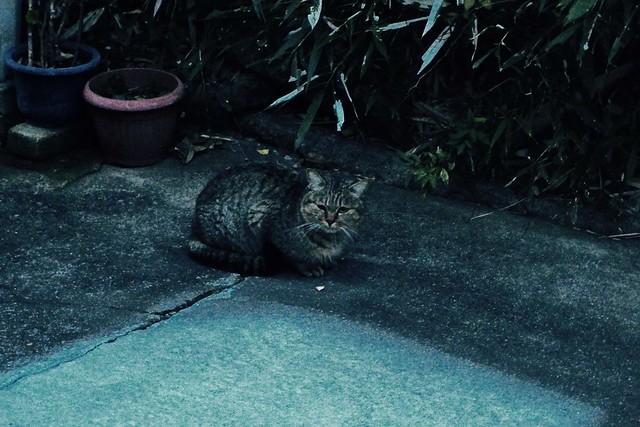 Today's Cat@2016-12-26