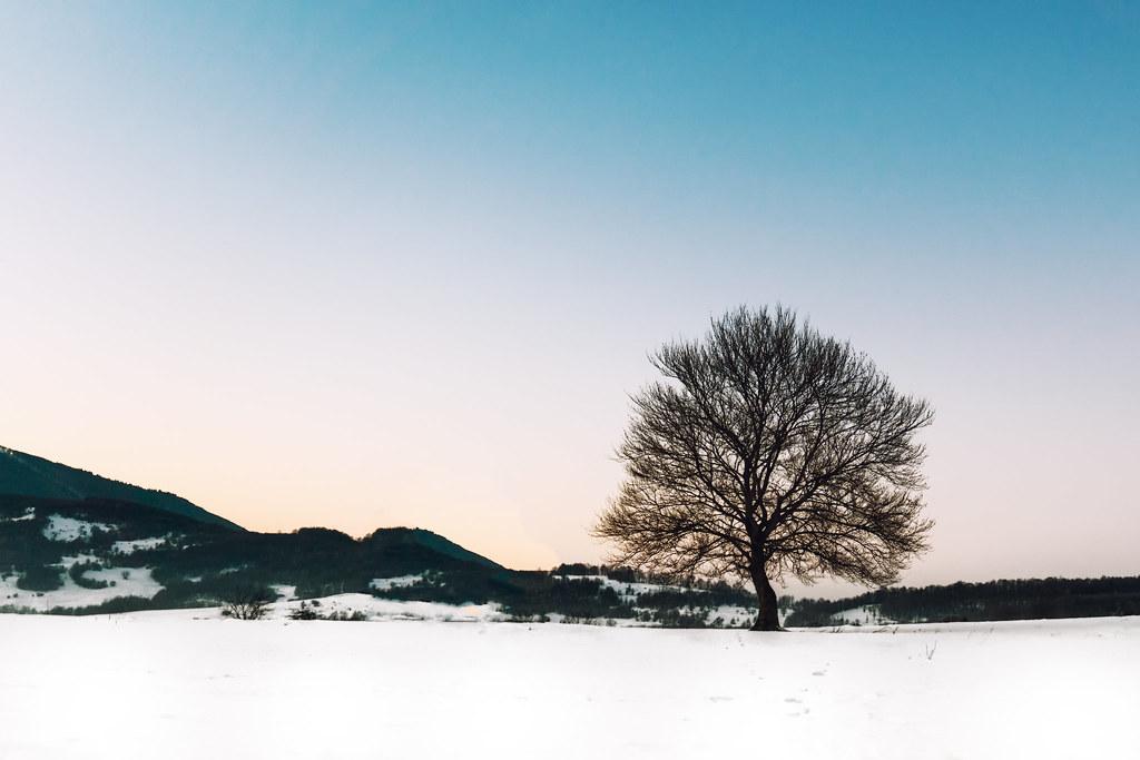 Day 30/365 Bare Tree