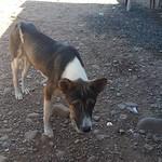 Fri, 01/20/2017 - 12:00 - Skinny dog at skinny chicken rest stop