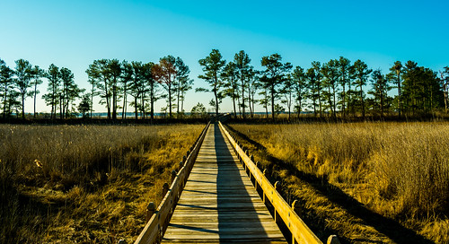 millsboro delaware thepeninsula beach lensflare landscape trees walkway nature light shadow march d3400 nikon gdjewellii davejewell georgejewell 1855mm kitlens usa america photo color groupe charlie l1 grass marsh swamp hiking trail groupecharliel1 groupecharliel2