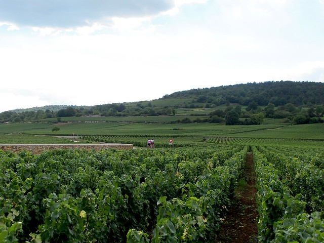 Baune and Bourgogne wine country