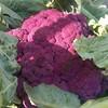 Good morning purple #cauliflower #produce #vegetable #johndmadurafarm #FarmersMarket #UnionSquare #NYC