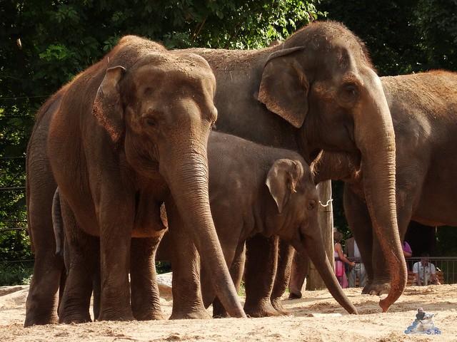 Zoo Berlin 26.08.2015  010