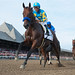 American Pharoah Travers first pass remote by budmeister 26.2