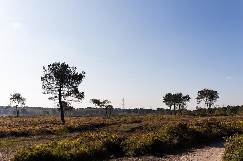 Looking across the lower heath