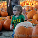 DRI Pumpkin Patch